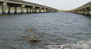 New paper explores possible effects of bridge construction on manatees