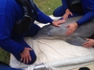 Dauphin Island Sea Lab coordinates rescue of stranded dolphin