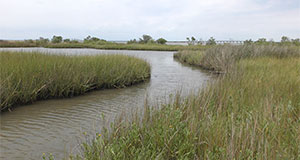 Workshop collaboration aims to move tidal marsh research forward