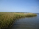 NOAA grant includes Dauphin Island Sea Lab expertise in sea level rise project